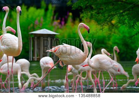 flock of flamingos on lake