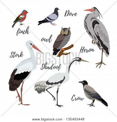 Set of vector bird icons. Colorful realistic birds. Owl and pigeon shadoof and crow finch and stork
