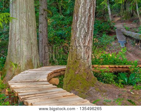 Long wooden path through the rain forest