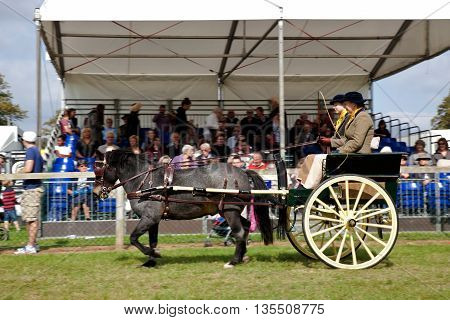 NEWBURY, UK - SEPTEMBER 21: Driver and companion competing in the gig driving class pass the main arena stand for the public to view at the Berks County show on September 21, 2014 in Newbury