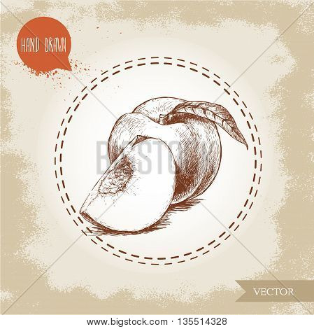 Hand drawn sketch style peach fruit. Vintage eco food vector illustration. Ripe peach and peach quarter. Grunge background.