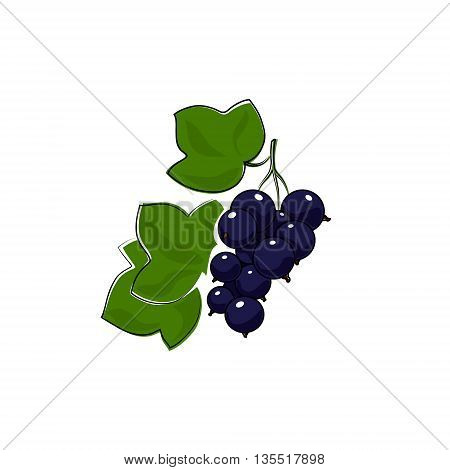 Berry Blackcurrant Isolated on White Background, Fruit Blackcurrant, Vector Illustration