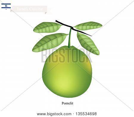Israel Fruit Illustration of Pomelit. One of The Most Popular Fruits in Israel.