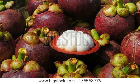 Mangosteens fruits. Bunch of ripe mangosteen. Fruit halved with pulp visible.