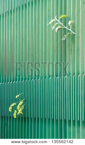 yellow flower and apple leaves peering from green metal fence. narrow dept of field focus