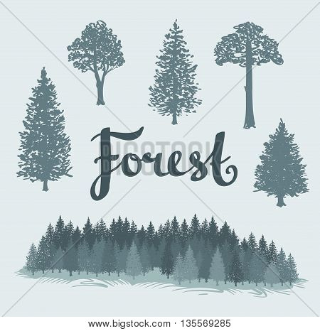 Set of the deciduous and the coniferous isolated hand drawn trees. Landscape of a coniferous forest. Vector Forest background.