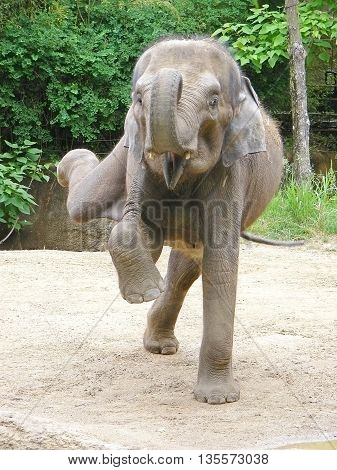 photography with scene of the portrait dancing indian elephant