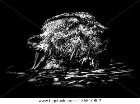 icebear in the water in black and white