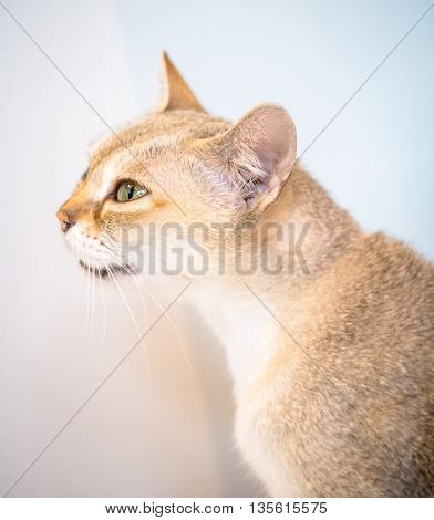 Portrait of cat from the side view