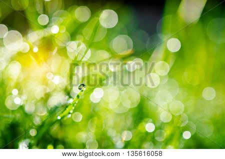 Fresh green grass with water drops and natuer bokeh.