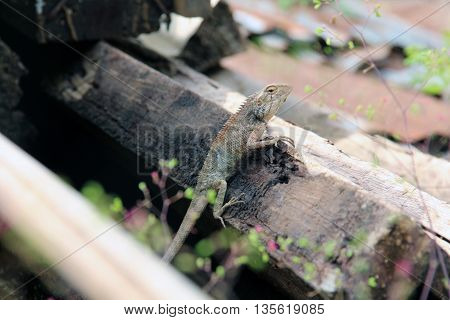Small tiny green brown wild small size tropical lizard resting under sunlight on a brown tree