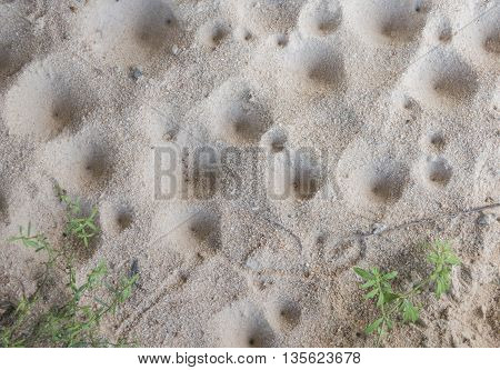 Ant Lion's  Larva Hole