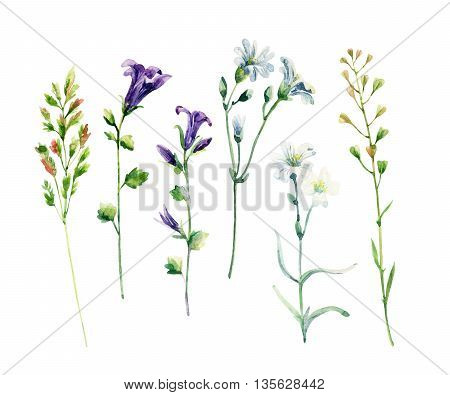 Watercolor meadow wild flowers set. Watercolor bellflowers and herbs isolated on white background. Hand painted natural illustration