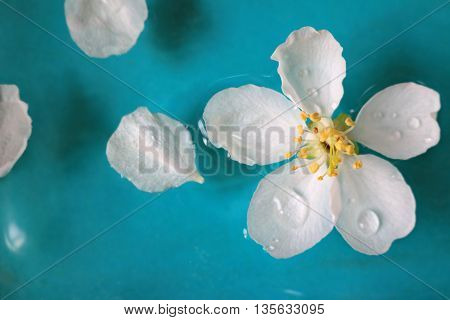 Crab apple flower blossom floating in water