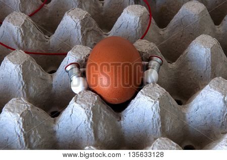 tend egg by music in the Egg carton tray