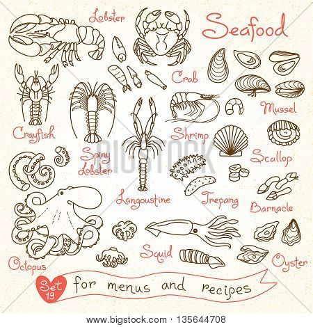 Set drawings of seafood for design menus, recipes, packaging and advertising. Shrimp, crab, mussels, squid, octopus, lobster, crayfish, lobster, scallops sea cucumbers oysters langoustine barnacle Vector illustration