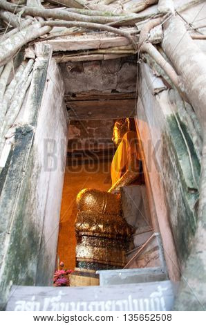 Huge roots of tree on the templeWat kai bang kung Unseen in Thailand