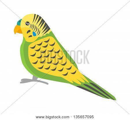 Cartoon parrots bird and parrot wild animal bird. Tropical parrot feather zoo birds tropical fauna macaw flying ara. Various cartoon exotic bird with parrots illustration vector