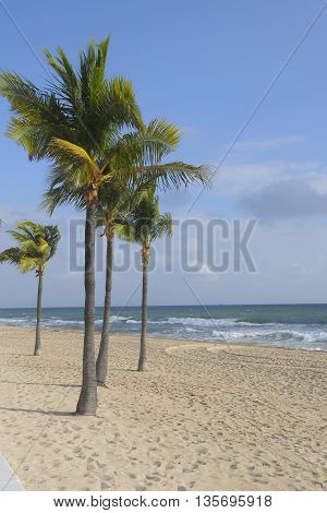 Palm trees on the beach in Fort Lauderdale, FL