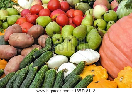 A variety of vegetables: tomatoes potatoes pumpkins squash corn corn apples presented for sale at the fair.