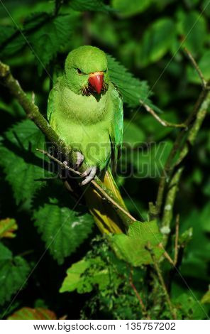 Green parrot with red nib on the offshoot of a plant