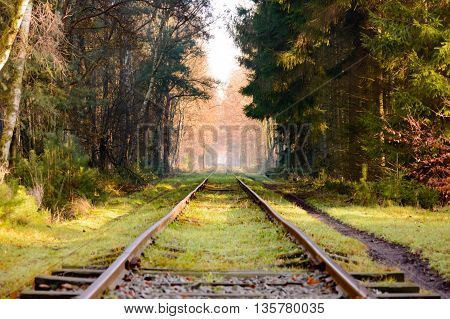 Set of old railroad tracks with moss covered wooden ties extending into the distance in dense hardwood forest with fallen leaves covering surface during autumn