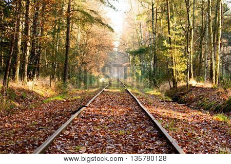 Old railroad tracks extending into the distance in dense hardwood forest with fallen leaves covering surface during autumn