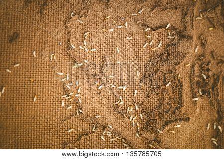 Wooden walls were destroyed by termites swarm