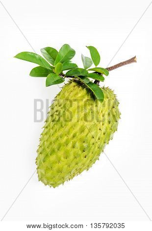 Sour Sop, Graviola, Guyabano, Prickly Custard Apple