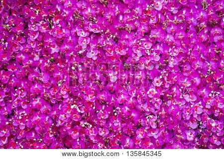 beautiful natural pink rose texture background, love