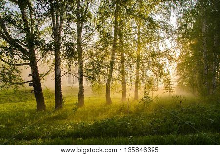 thick morning fog in the summer forest. thick morning fog in the forest at pond. Morning landscape in summer thick fog. dense fog in the morning. early morning. forest hiding in the fog.