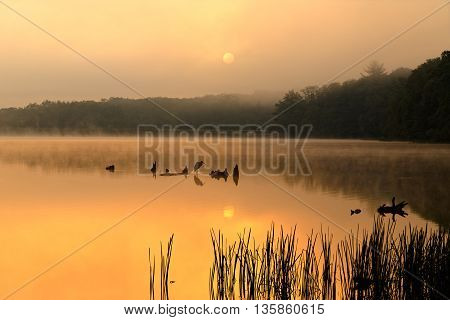 A foggy sunrise at Locust Lake State Park Schuylkill County Pennsylvania USA.
