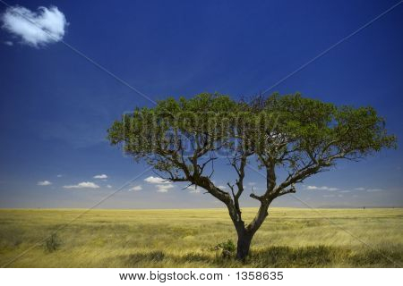 Serengeti National Park Views