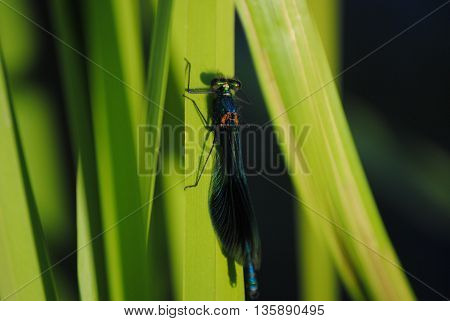 Insect  Scarab living Life beautiful beautiful thing love animal planet