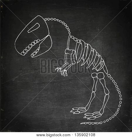 Tyrannosaurus rex fossil. Dinosaurus skeleton bones. Hand drawn vector stock illustration. Chalk board drawing.