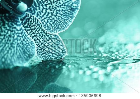 Beautiful blue orchid flower petals background with copy space