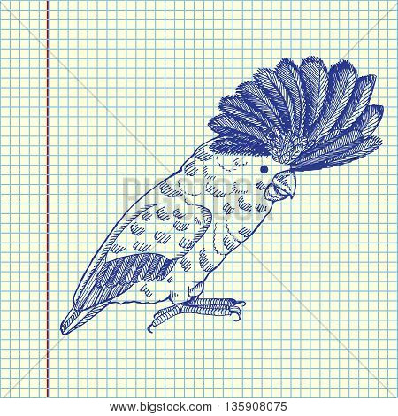 Parrot with pappus. Hand drawn vector stock illustration. Sheet ballpen drawing.