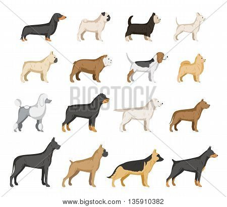 Vector dog breeds collection isolated on white. Dog icons collection for cynology dog club pet clinic and pet shop.