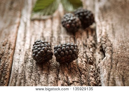 Bramble, brambleberry (bramble berry) is healthy berry fruit