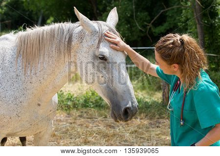 Female Veterinarian performing a scan on a young mare