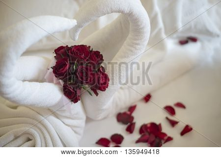 White wedding background with red rose flower