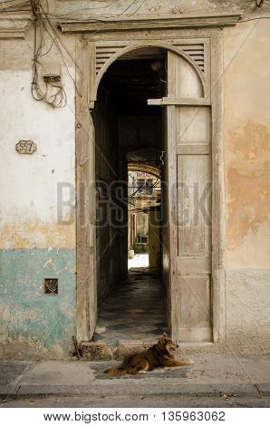 HAVANA - CUBA JUNE 19, 2016: A dog sits outside the doorway of his home, one of thousands of deteriorating and decaying buildings in La Habana Vieja.