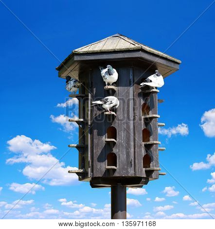 Wooden dovecote with pigeons on the background blue sky.