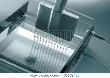 Loading DNA Samples onto an Agarose Gel for Electrophoresis. Science concept. Blue colored image