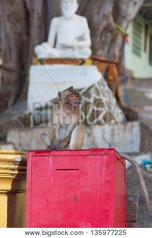 Wild monkey sitting on a red box with Buddha sculpture on the background