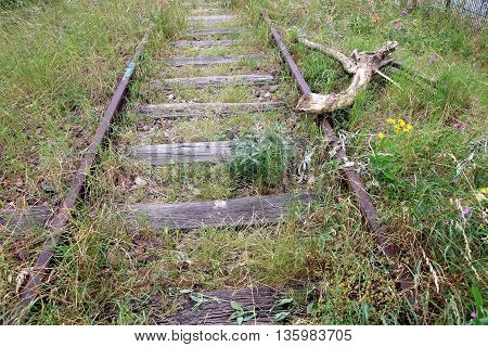 abandoned rusty rails overgrown with wils grass