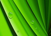 Abstract illustration of a dew on grass poster