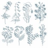 Herbs wild flowers botanical medicinal organic healing plants vector set in hand drawn style. Herb medicine plant and illustration of botanical plant for healing poster