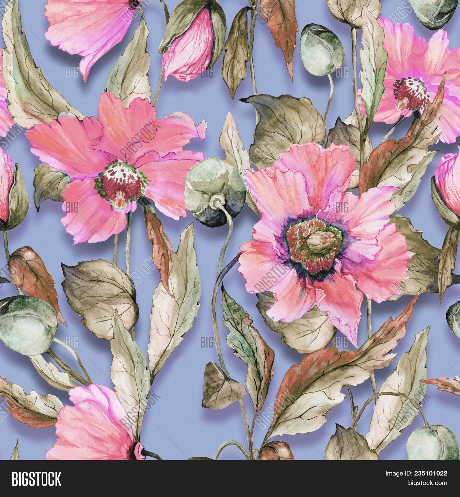 Beautiful Pink Poppy Image Photo Free Trial Bigstock