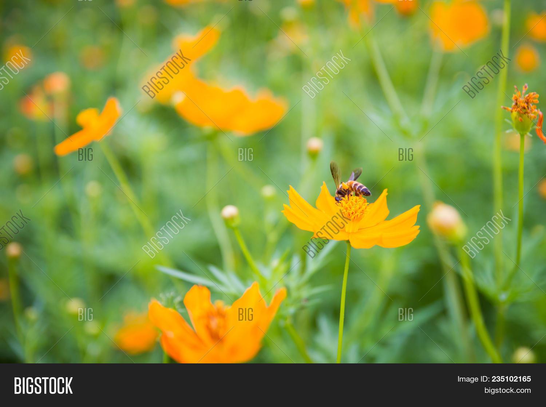 Yellow Flowers Yellow Image Photo Free Trial Bigstock